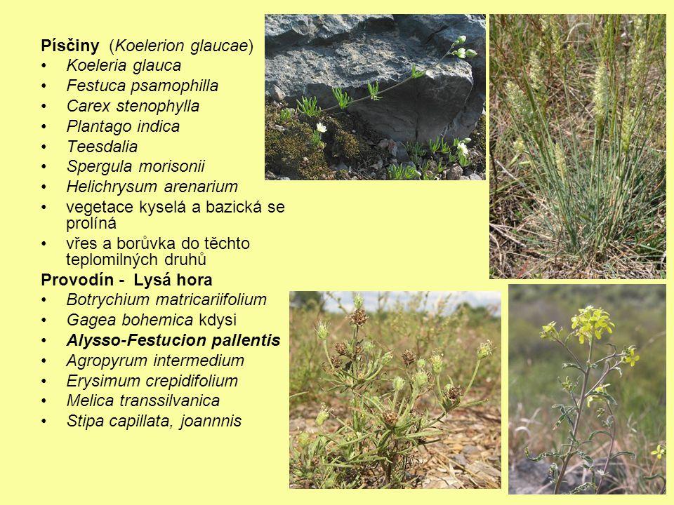 Písčiny (Koelerion glaucae)