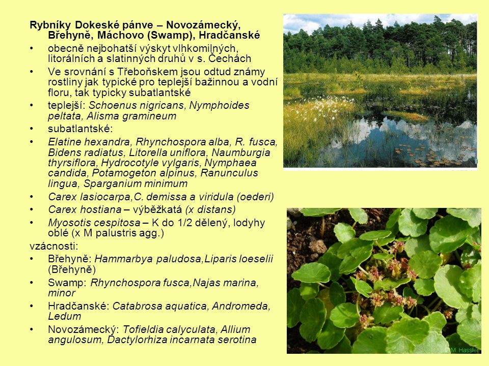 Rybníky Dokeské pánve – Novozámecký, Břehyně, Máchovo (Swamp), Hradčanské