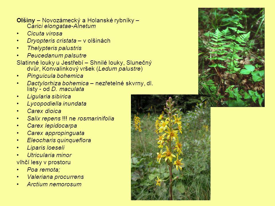 Olšiny – Novozámecký a Holanské rybníky – Carici elongatae-Alnetum
