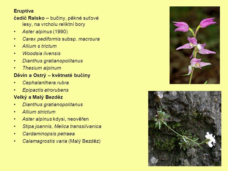 Eruptiva čedič Ralsko – bučiny, pěkné suťové lesy, na vrcholu reliktní bory. Aster alpinus (1990) Carex pediformis subsp. macroura.
