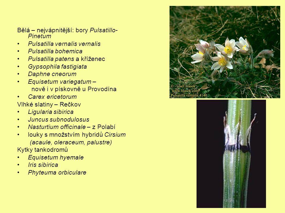 Bělá – nejvápnitější: bory Pulsatillo-Pinetum