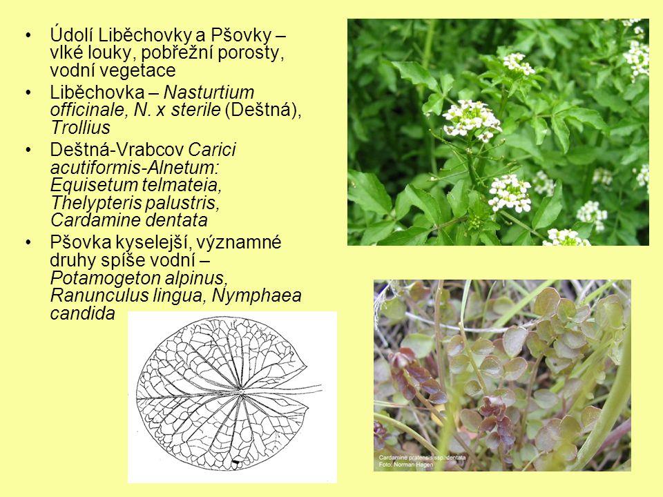 Údolí Liběchovky a Pšovky – vlké louky, pobřežní porosty, vodní vegetace