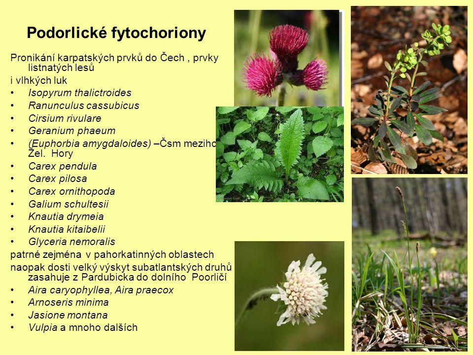 Podorlické fytochoriony