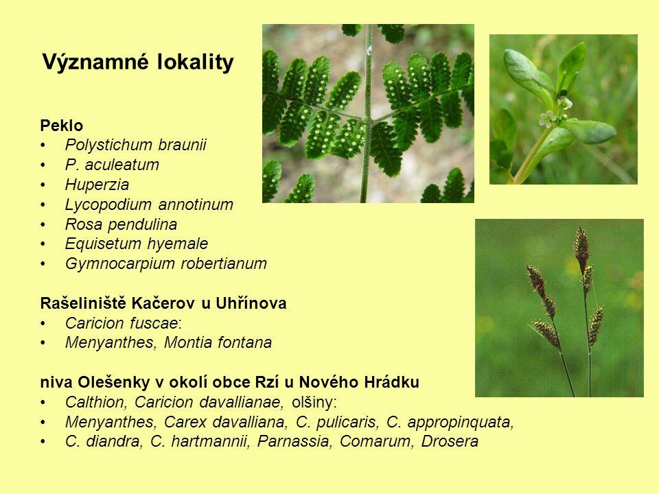 Významné lokality Peklo Polystichum braunii P. aculeatum Huperzia