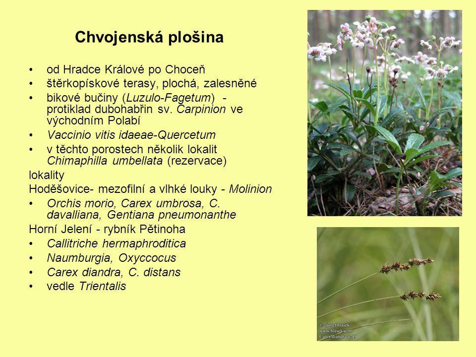 Chvojenská plošina od Hradce Králové po Choceň