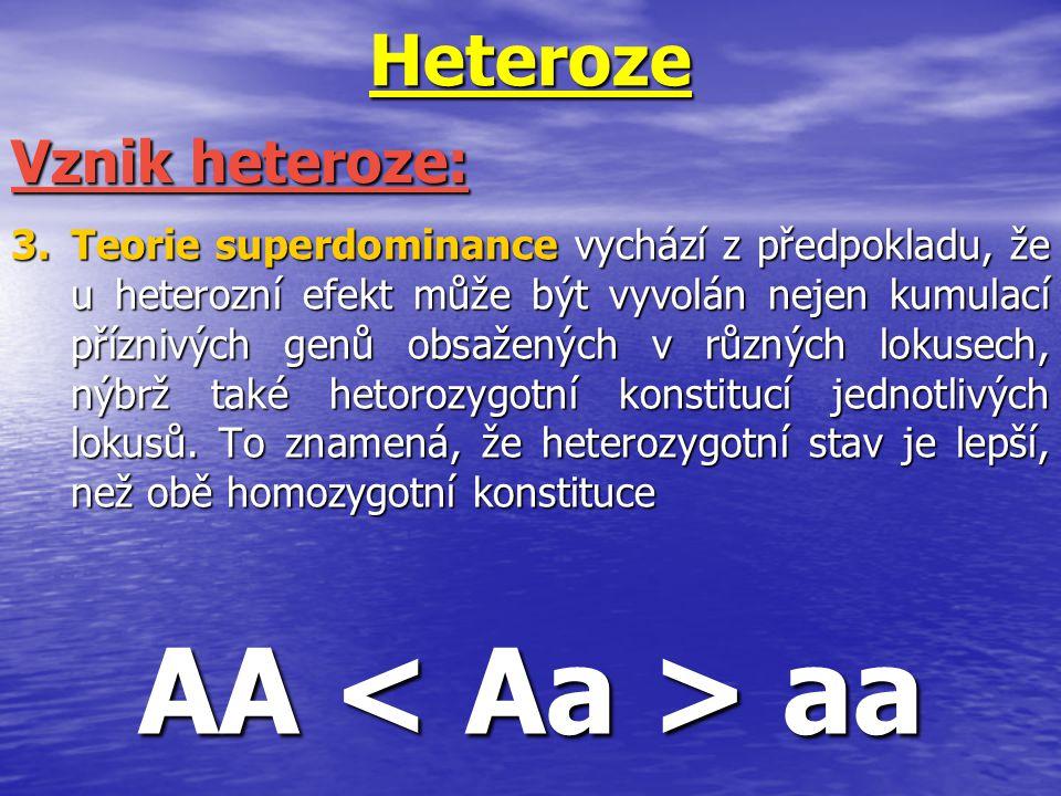AA < Aa > aa Heteroze Vznik heteroze: