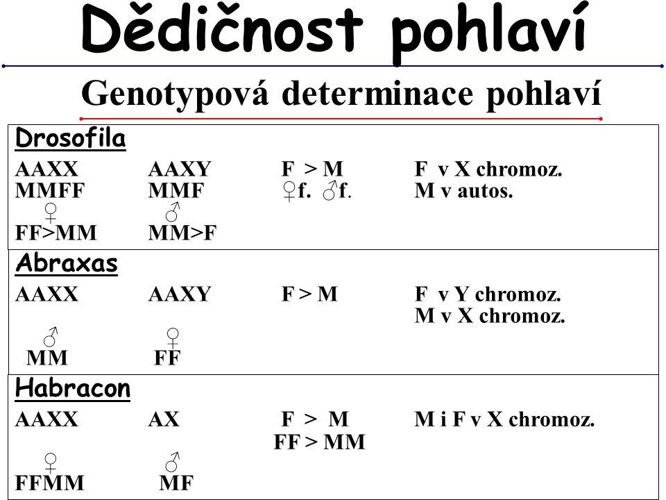 Genotypová determinace pohlaví
