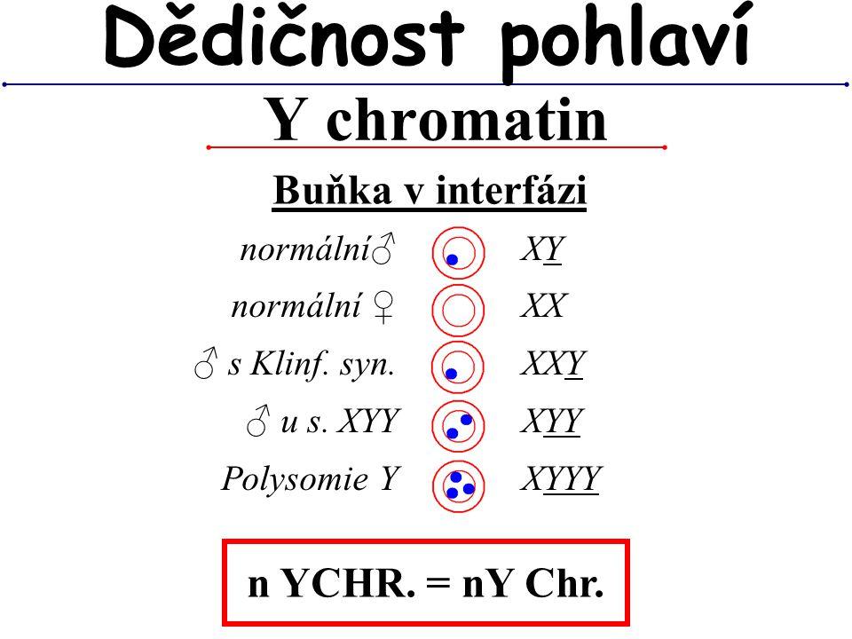 Dědičnost pohlaví Y chromatin Buňka v interfázi n YCHR. = nY Chr.