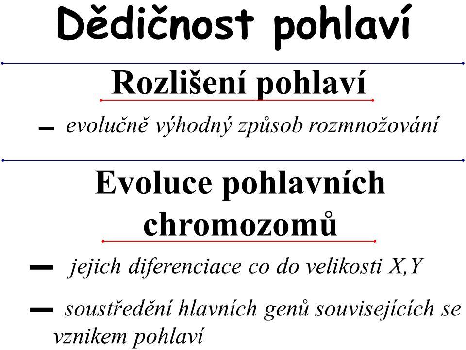 Evoluce pohlavních chromozomů