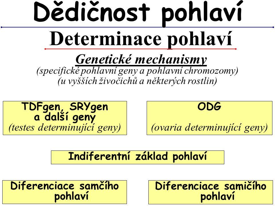 Dědičnost pohlaví Determinace pohlaví Genetické mechanismy