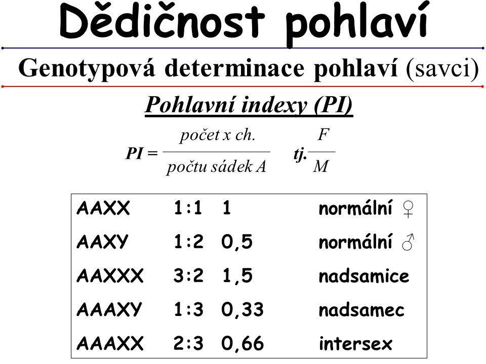 Genotypová determinace pohlaví (savci)