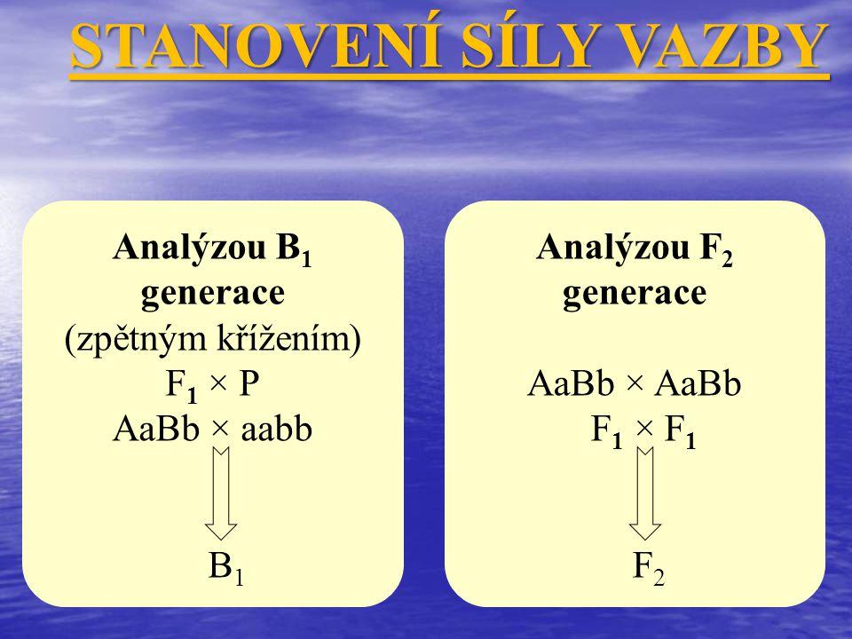 STANOVENÍ SÍLY VAZBY Analýzou B1 generace (zpětným křížením) F1 × P
