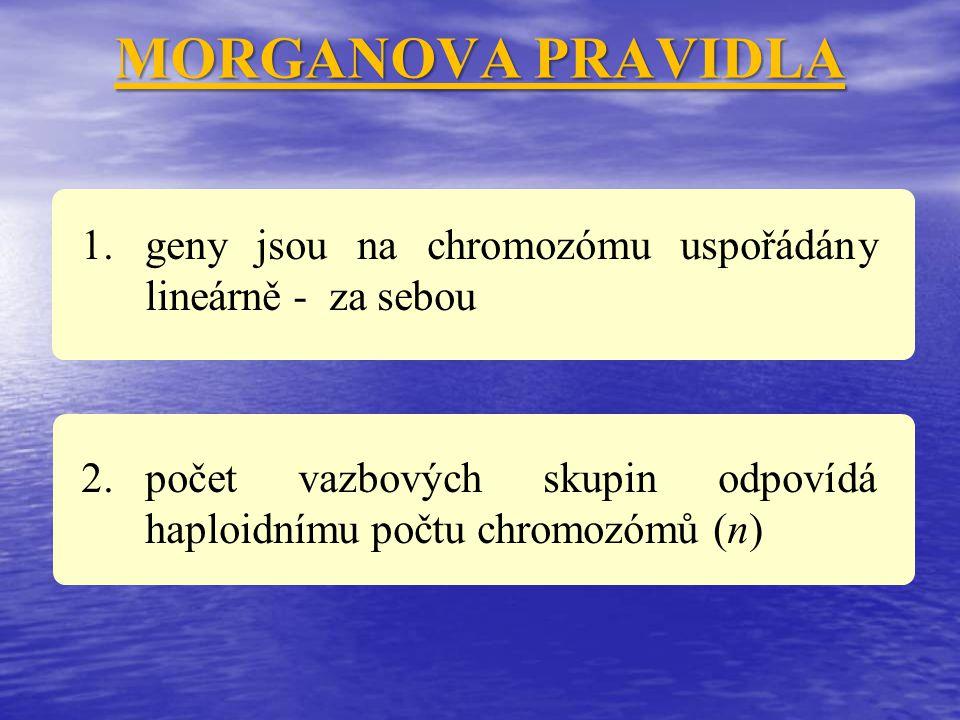 MORGANOVA PRAVIDLA geny jsou na chromozómu uspořádány lineárně - za sebou.
