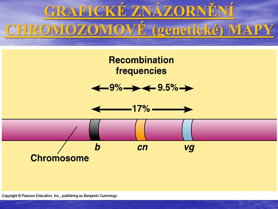 GRAFICKÉ ZNÁZORNĚNÍ CHROMOZOMOVÉ (genetické) MAPY