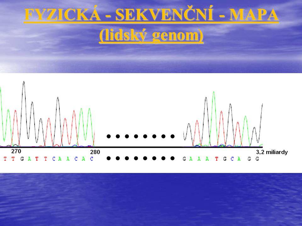 FYZICKÁ - SEKVENČNÍ - MAPA (lidský genom)
