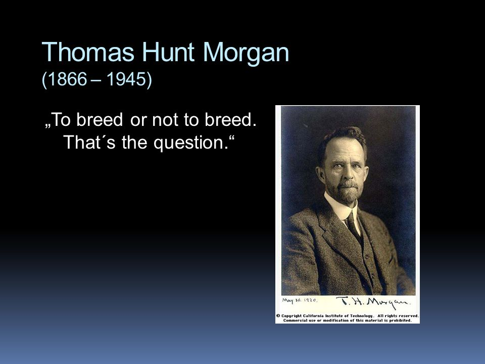 "Thomas Hunt Morgan (1866 – 1945) ""To breed or not to breed. That´s the question."