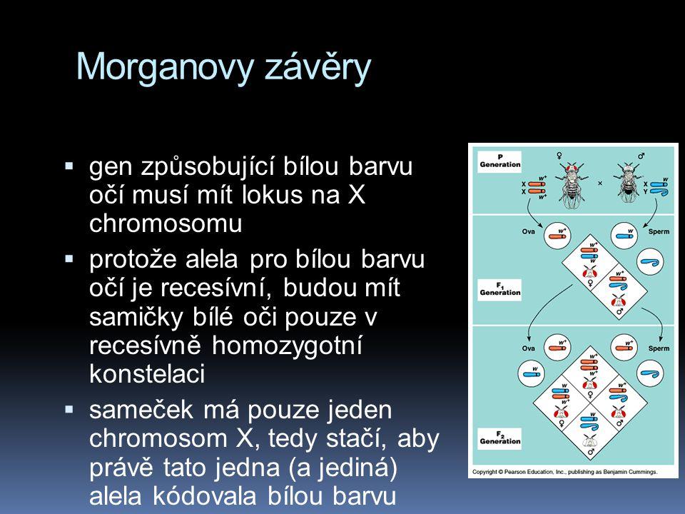 Morganovy závěry gen způsobující bílou barvu očí musí mít lokus na X chromosomu.