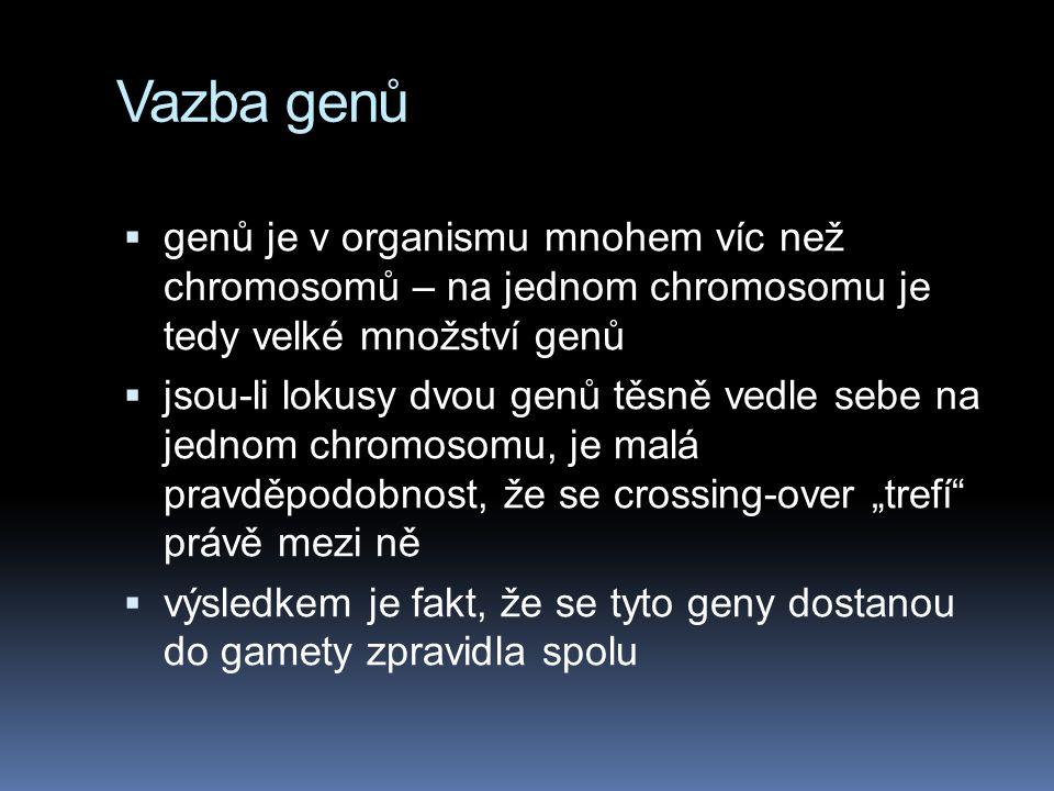Vazba genů genů je v organismu mnohem víc než chromosomů – na jednom chromosomu je tedy velké množství genů.