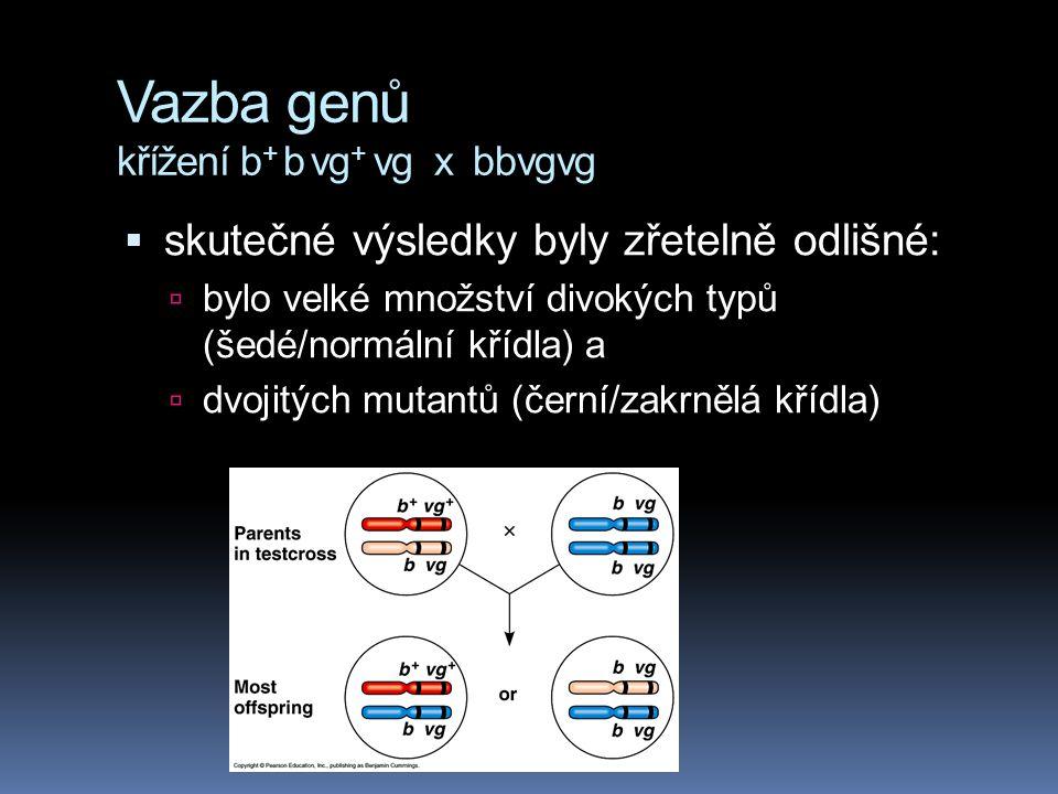 Vazba genů křížení b+ b vg+ vg x bbvgvg