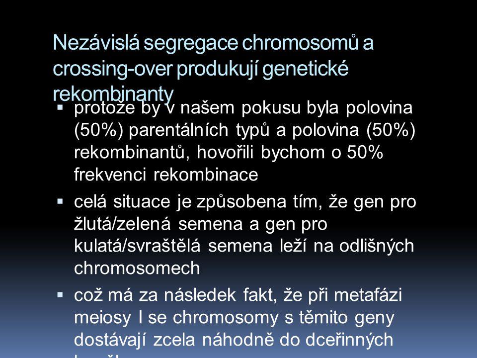 Nezávislá segregace chromosomů a crossing-over produkují genetické rekombinanty