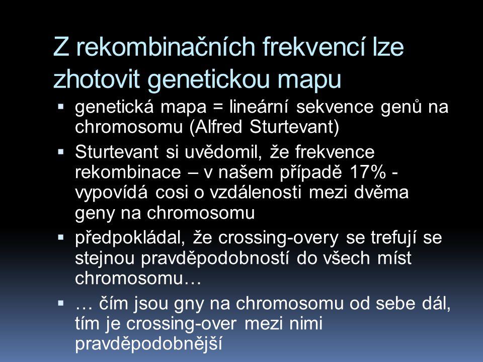 Z rekombinačních frekvencí lze zhotovit genetickou mapu