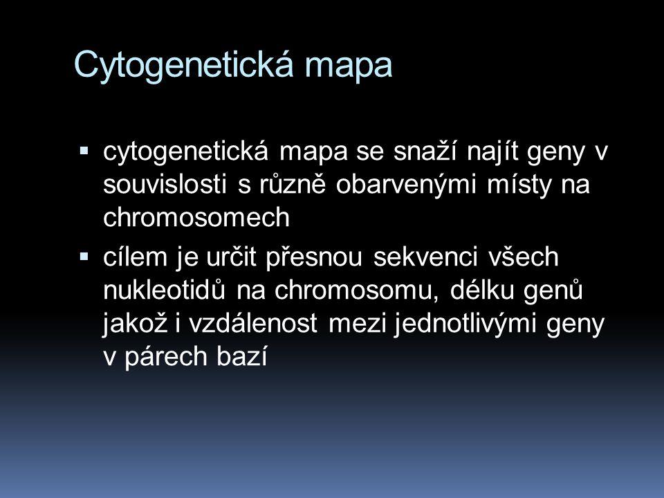 Cytogenetická mapa cytogenetická mapa se snaží najít geny v souvislosti s různě obarvenými místy na chromosomech.