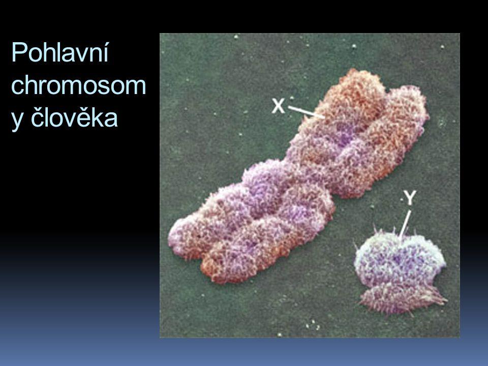 Pohlavní chromosomy člověka