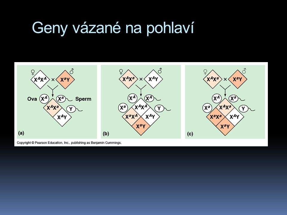 Geny vázané na pohlaví