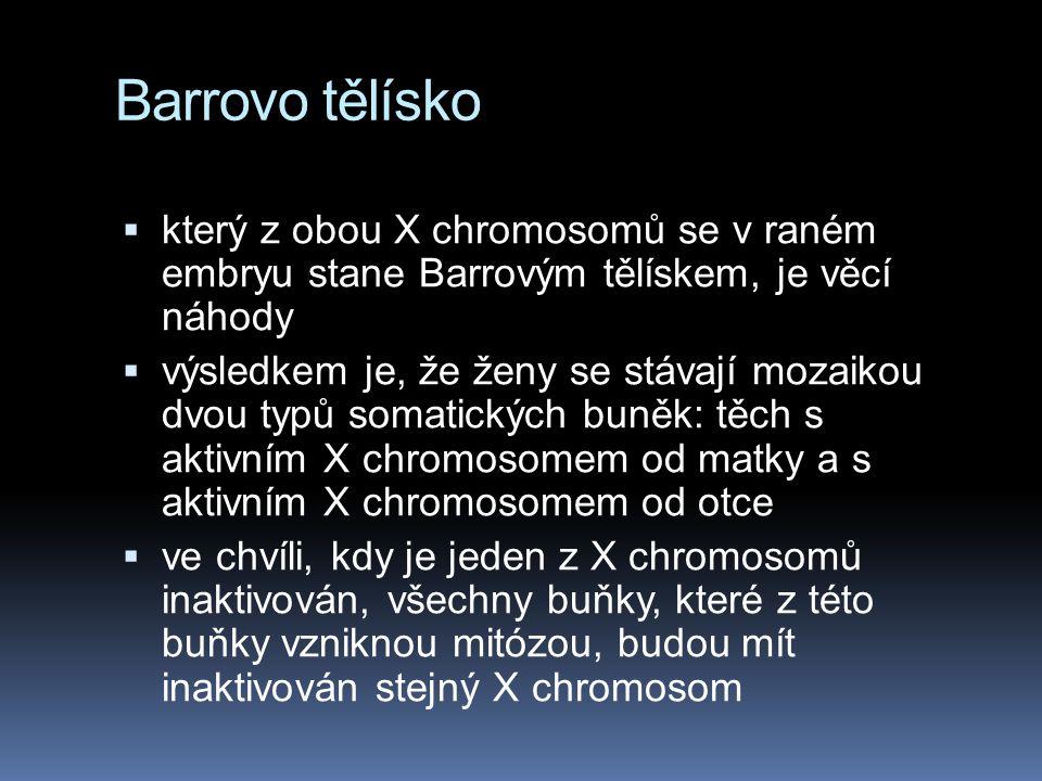 Barrovo tělísko který z obou X chromosomů se v raném embryu stane Barrovým tělískem, je věcí náhody.