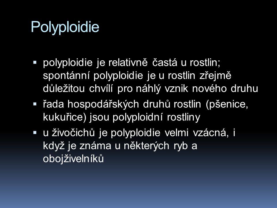 Polyploidie polyploidie je relativně častá u rostlin; spontánní polyploidie je u rostlin zřejmě důležitou chvílí pro náhlý vznik nového druhu.