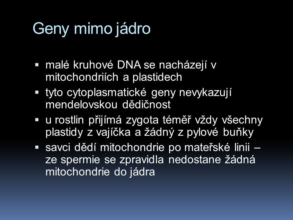 Geny mimo jádro malé kruhové DNA se nacházejí v mitochondriích a plastidech. tyto cytoplasmatické geny nevykazují mendelovskou dědičnost.