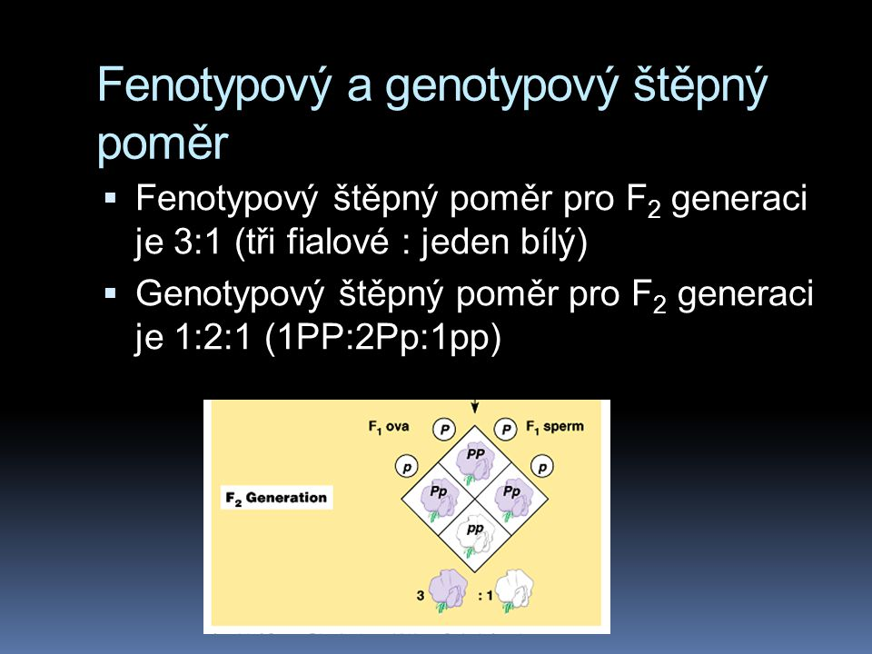 Fenotypový a genotypový štěpný poměr