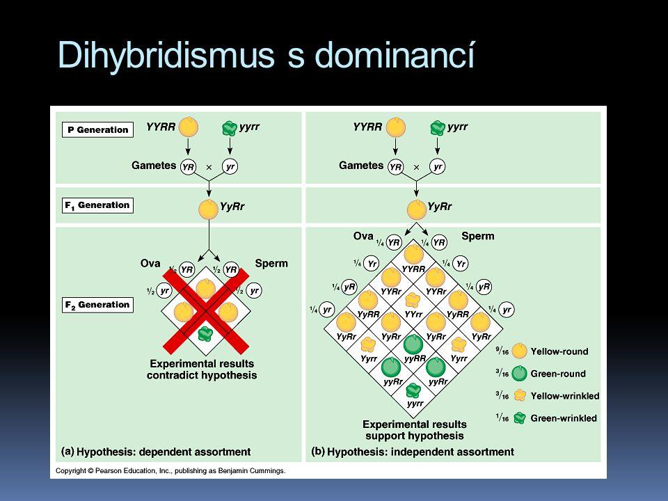 Dihybridismus s dominancí