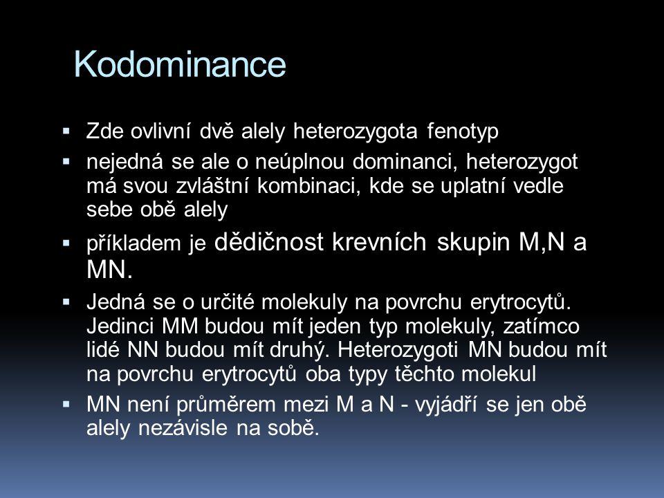 Kodominance Zde ovlivní dvě alely heterozygota fenotyp