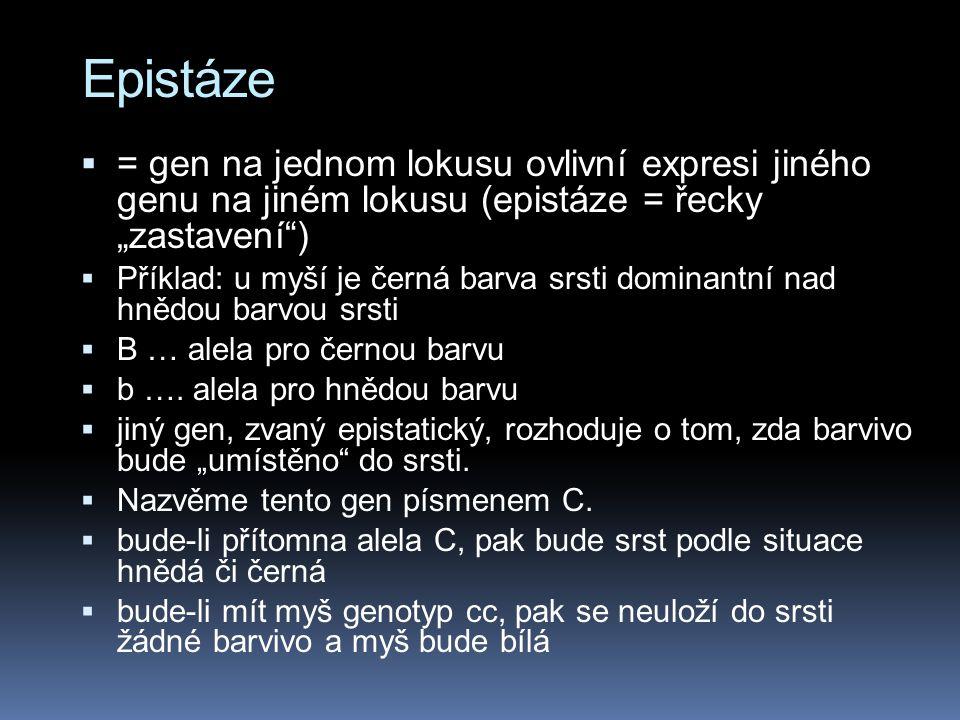 """Epistáze = gen na jednom lokusu ovlivní expresi jiného genu na jiném lokusu (epistáze = řecky """"zastavení )"""