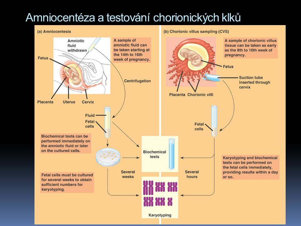 Amniocentéza a testování chorionických klků