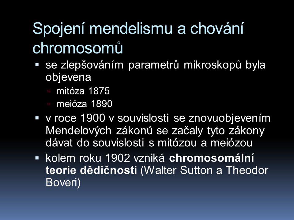 Spojení mendelismu a chování chromosomů