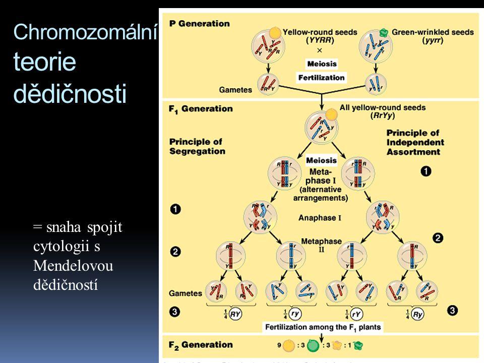 Chromozomální teorie dědičnosti