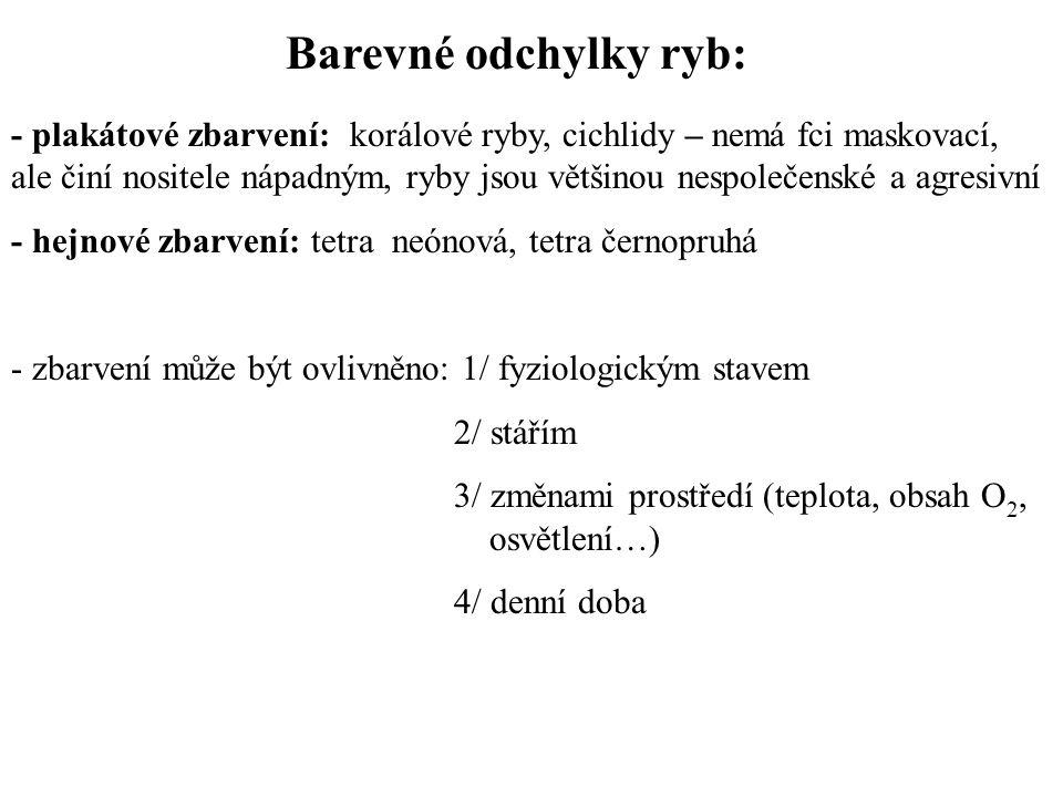 Barevné odchylky ryb: