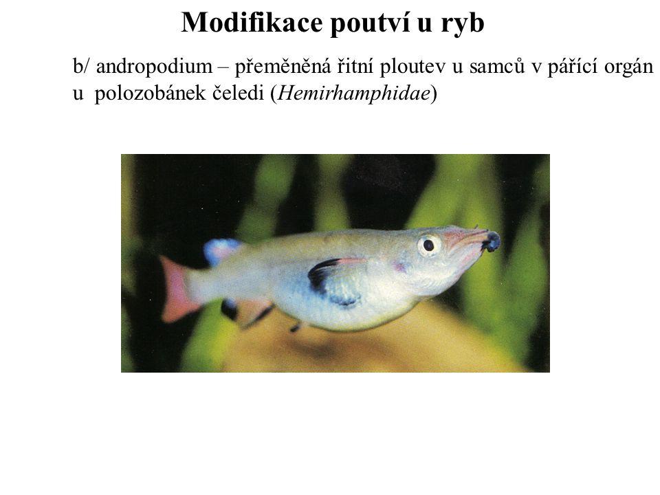 Modifikace poutví u ryb