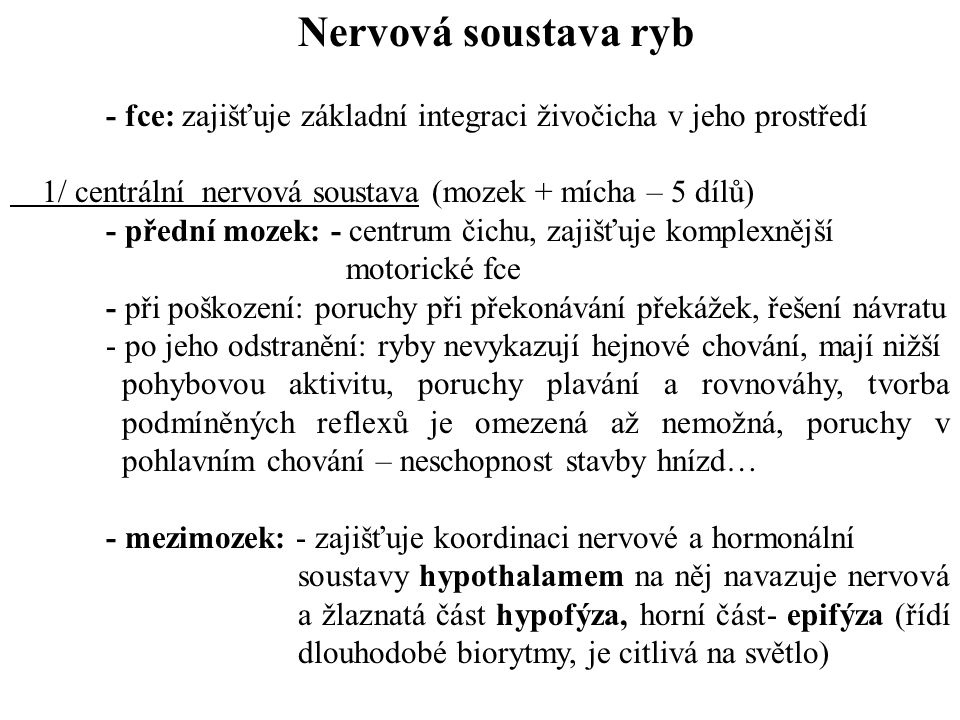 Nervová soustava ryb - fce: zajišťuje základní integraci živočicha v jeho prostředí. 1/ centrální nervová soustava (mozek + mícha – 5 dílů)