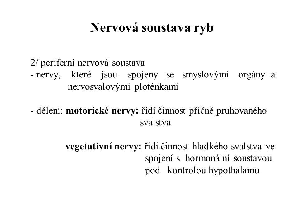 Nervová soustava ryb