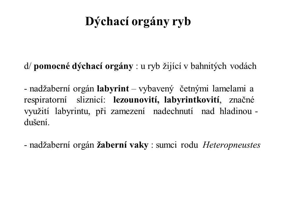 Dýchací orgány ryb