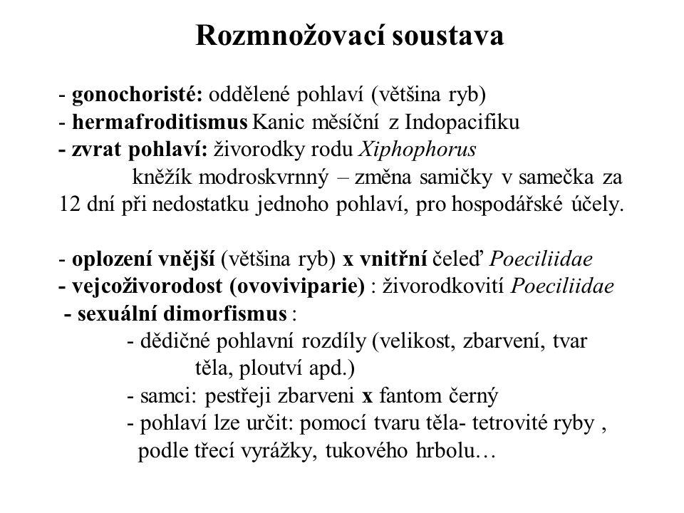 Rozmnožovací soustava - gonochoristé: oddělené pohlaví (většina ryb) - hermafroditismus Kanic měsíční z Indopacifiku - zvrat pohlaví: živorodky rodu Xiphophorus kněžík modroskvrnný – změna samičky v samečka za 12 dní při nedostatku jednoho pohlaví, pro hospodářské účely.