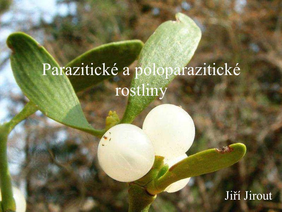 Parazitické a poloparazitické rostliny