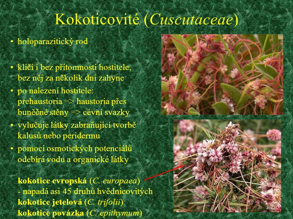 Kokoticovité (Cuscutaceae)