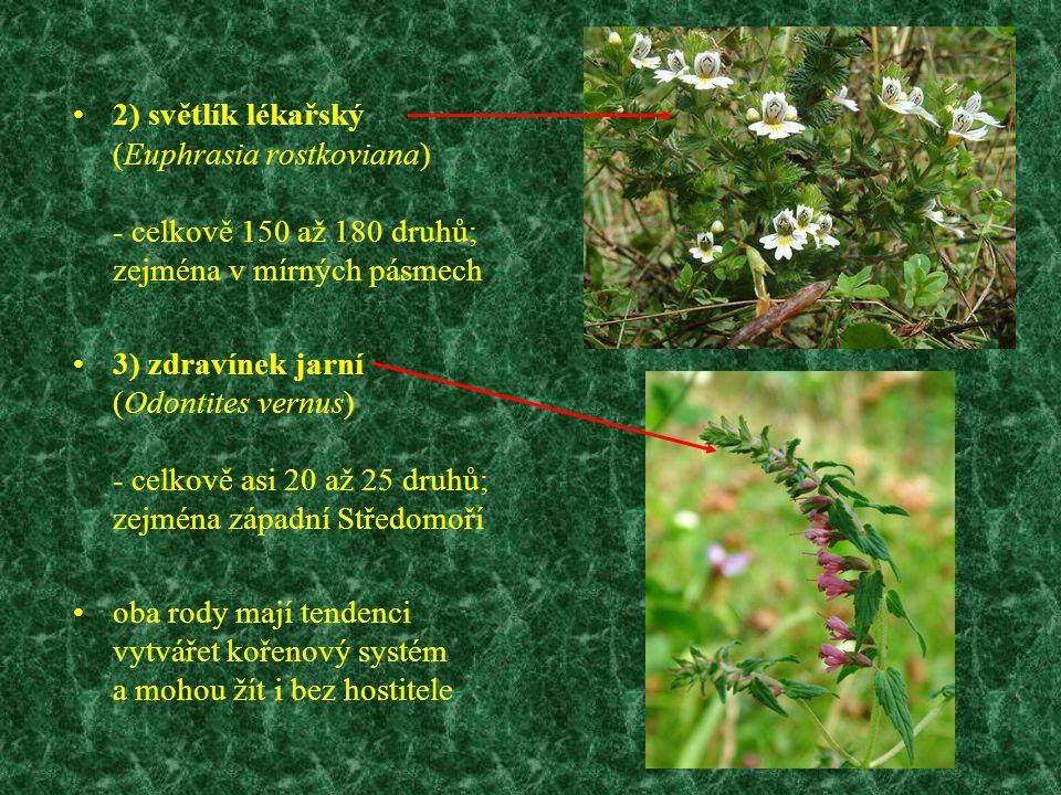 2) světlík lékařský (Euphrasia rostkoviana) - celkově 150 až 180 druhů; zejména v mírných pásmech