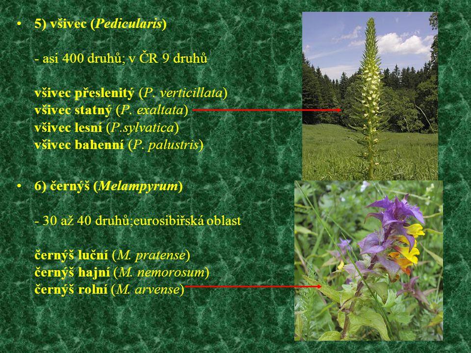 5) všivec (Pedicularis) - asi 400 druhů; v ČR 9 druhů všivec přeslenitý (P. verticillata) všivec statný (P. exaltata) všivec lesní (P.sylvatica) všivec bahenní (P. palustris)