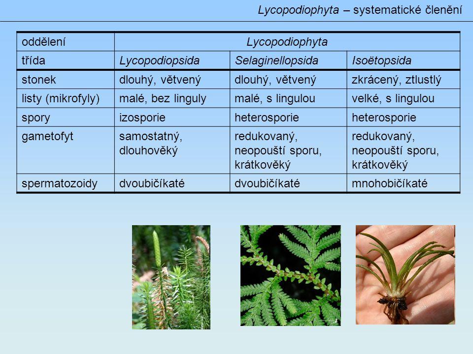 Lycopodiophyta – systematické členění