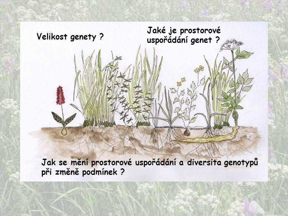 Jaké je prostorové uspořádání genet